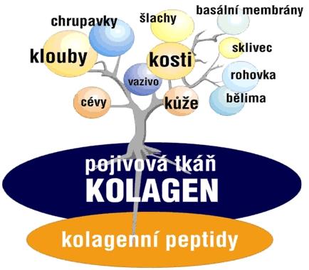thumbnail-434380-kolagen-b-clanek-1351761904